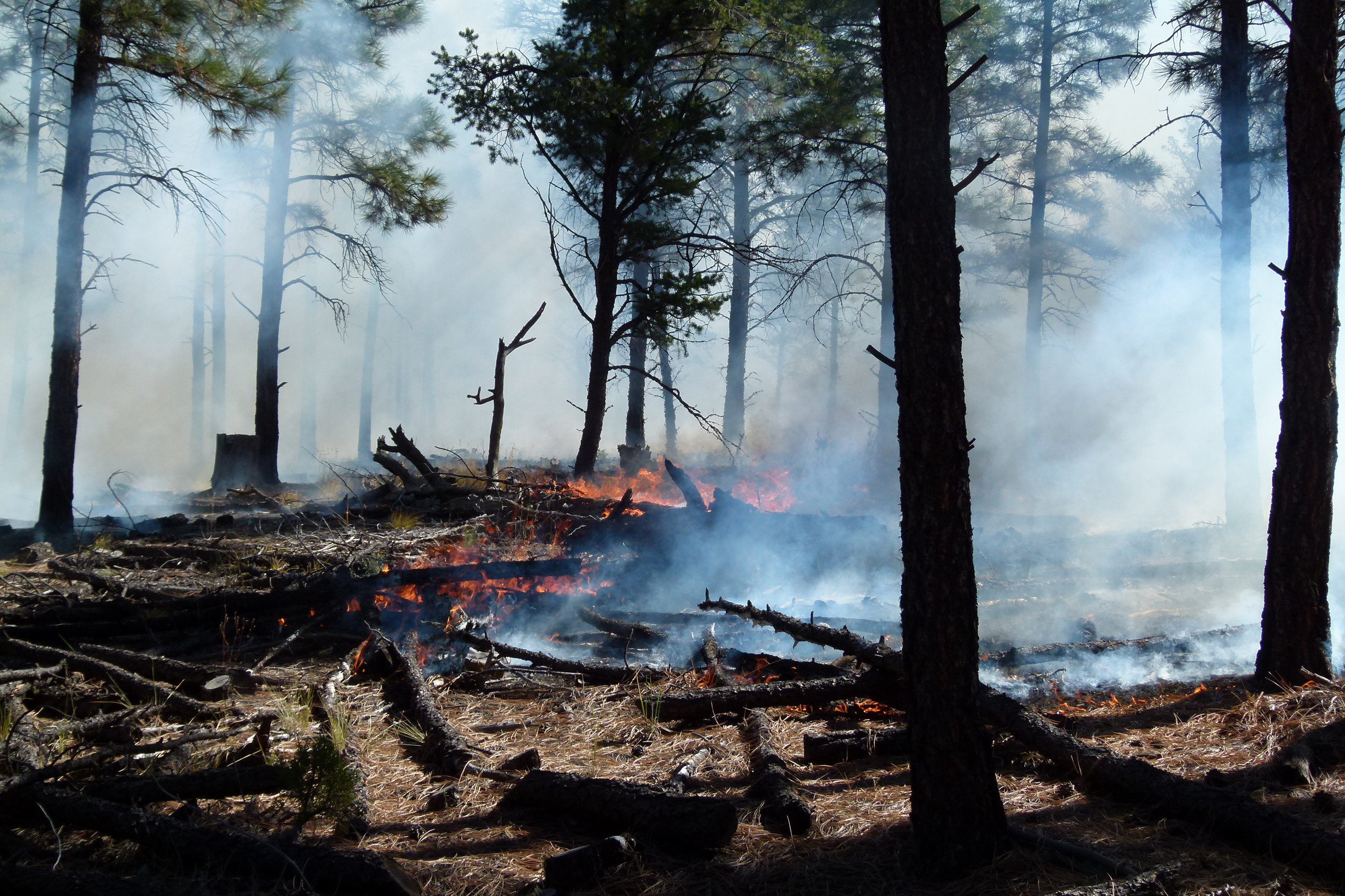 Managed burn in the Zuni Mountains