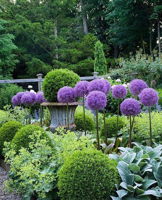 townandcountry_allium.jpg