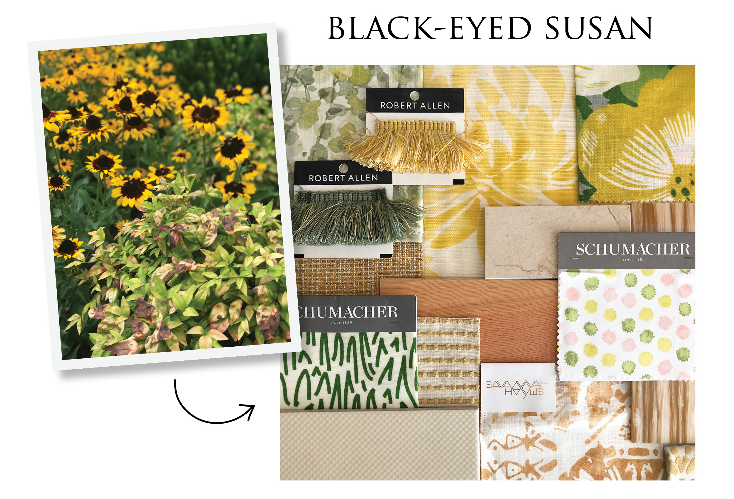 MotherNaturesColors_Black-eyedSusan.jpg