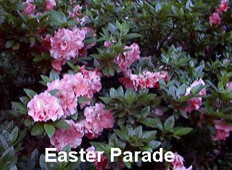 Easter Parade.JPG
