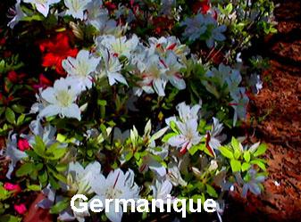 Germanique.JPG