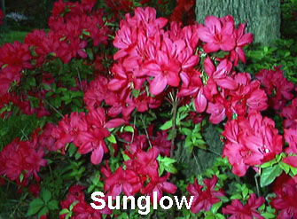 Sunglow.JPG