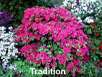 Tradition.JPG