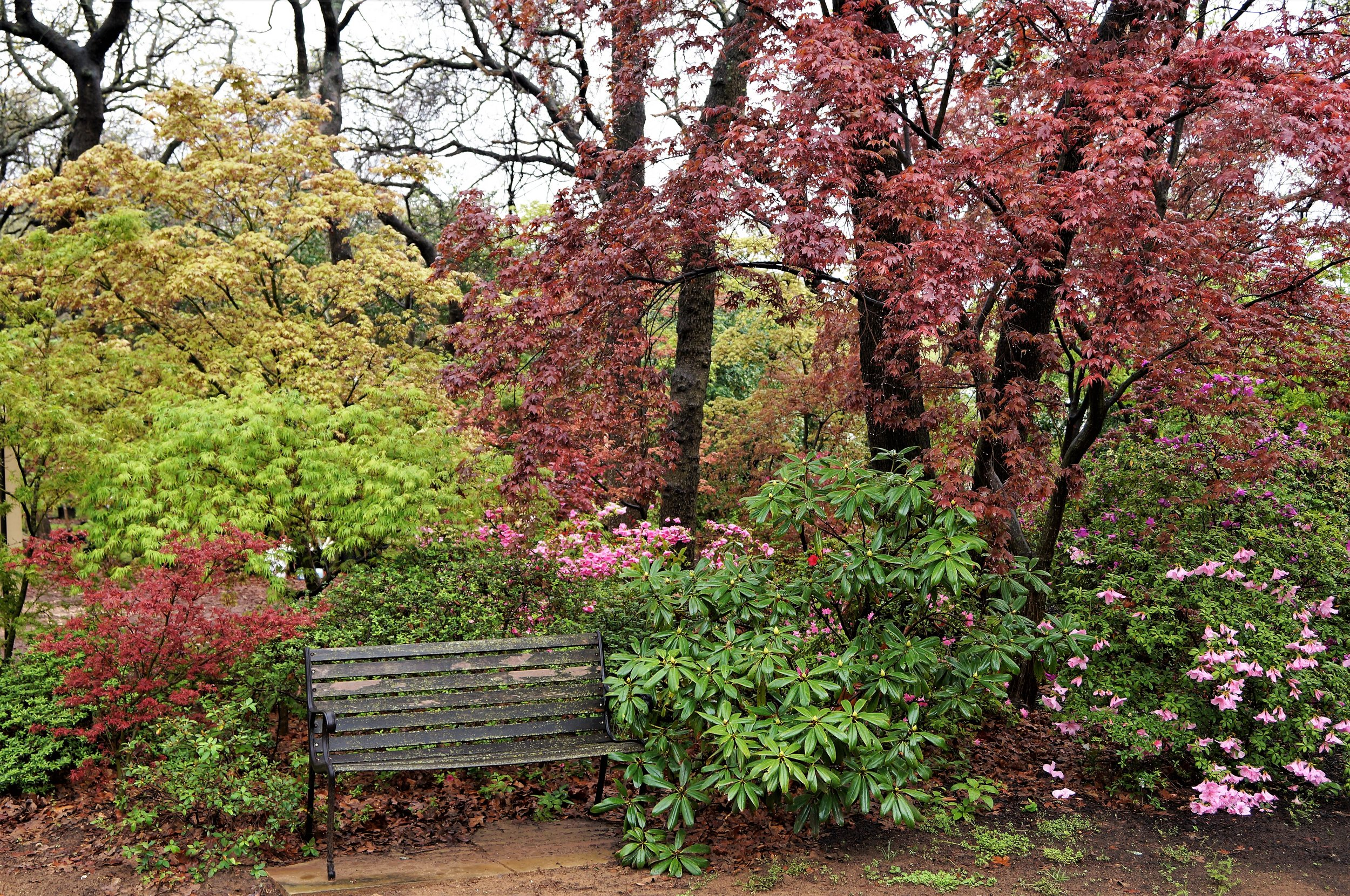 We even have this comfortable area to relax when the maples overwhelm our visitors!
