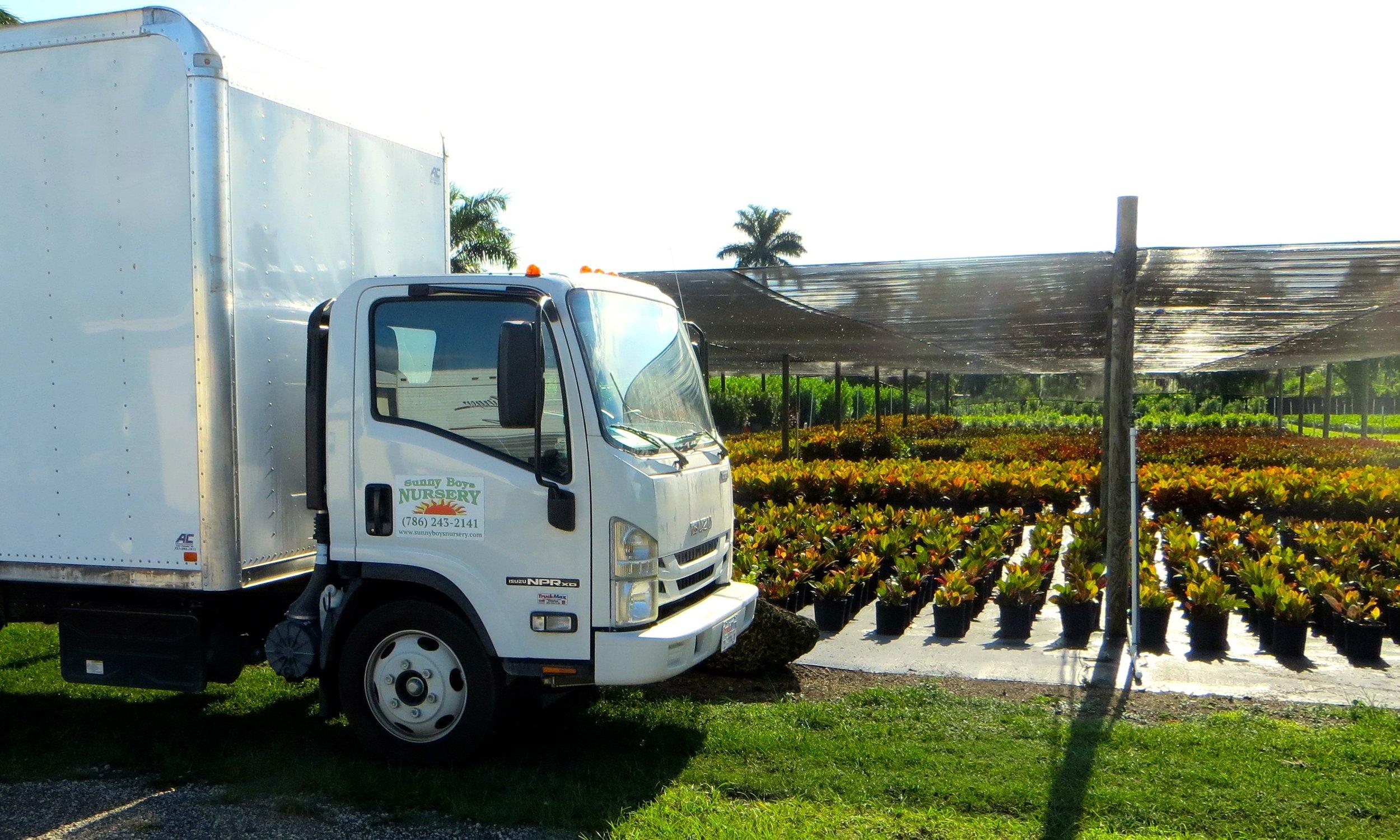 Sunny Boys Shipping - nursery florida landscaping plants hedge shrub bush.JPG