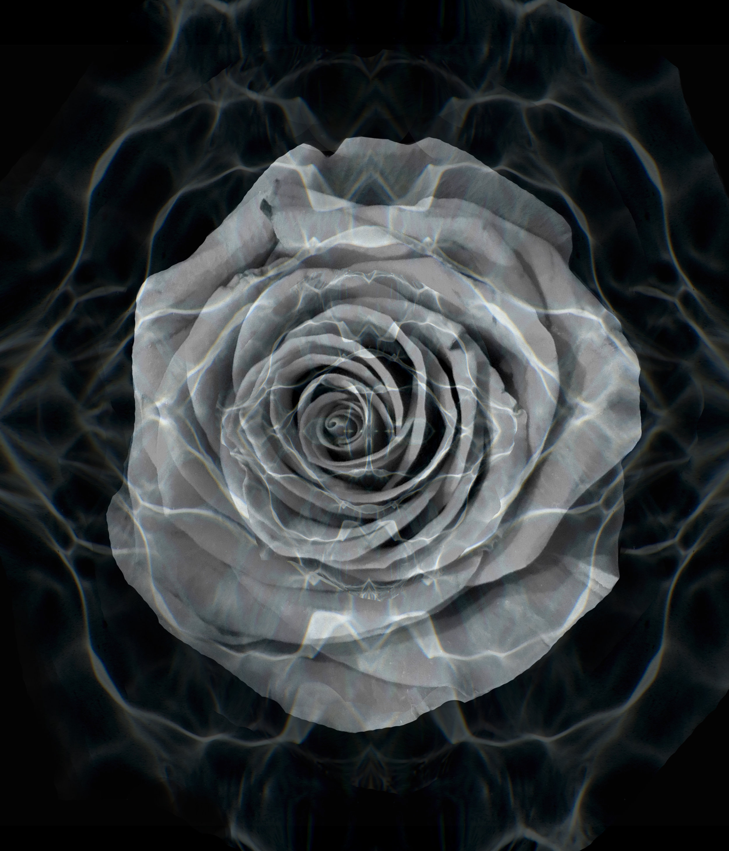 "Frequencies - White Rose   Print on Glass  24"" x 30"""