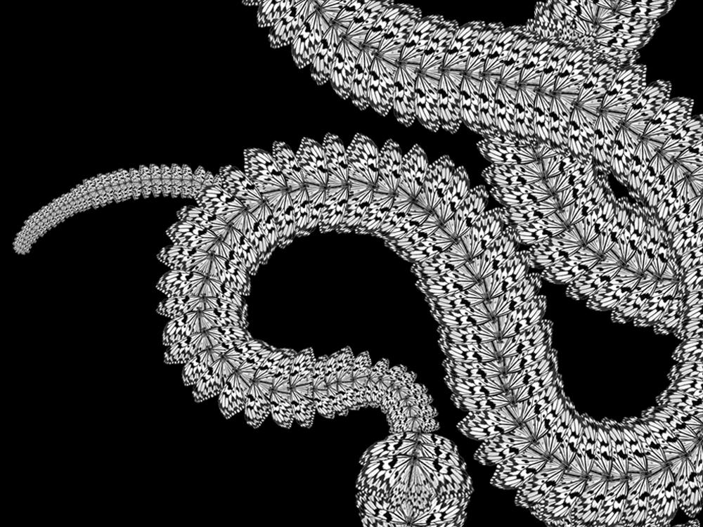 """Serpentine   Gelatin Silver Print  48"""" x 30""""  2019"""