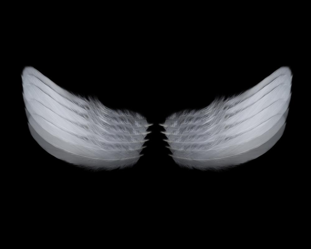 "Wings   Gelatin Silver Print  20"" x 20""  2017"