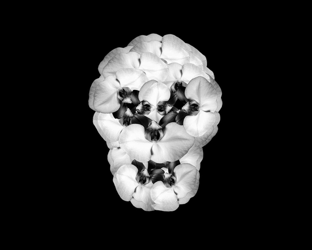 "Skull   Gelatin Silver Print  20"" x 20""  2017"
