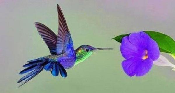 Hummingbird - Horizontal.jpg