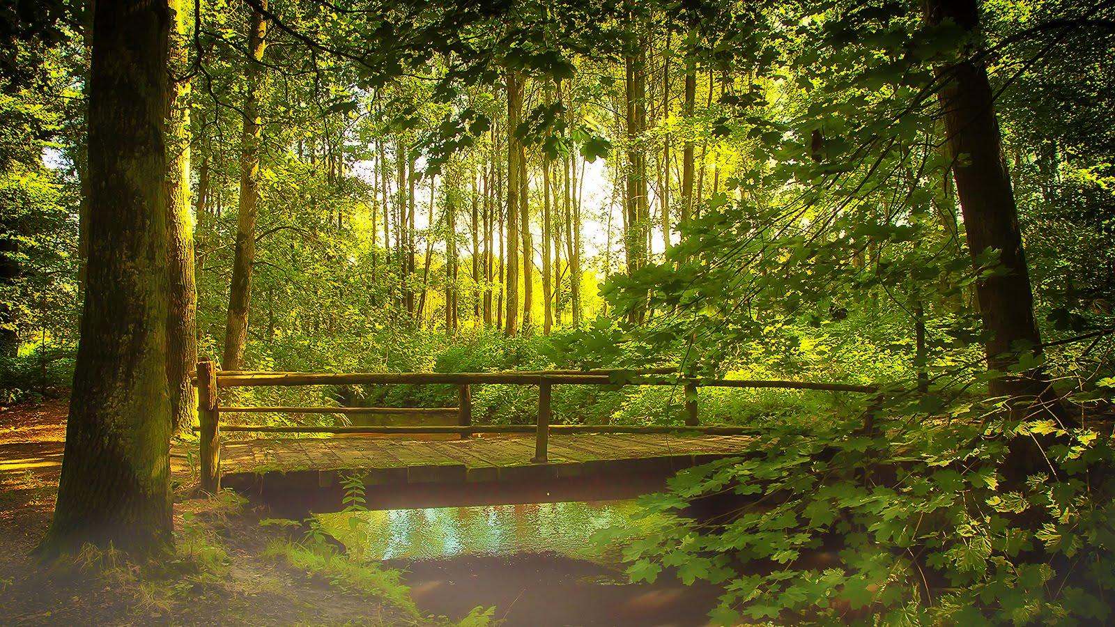 woodland-walks-7.jpg