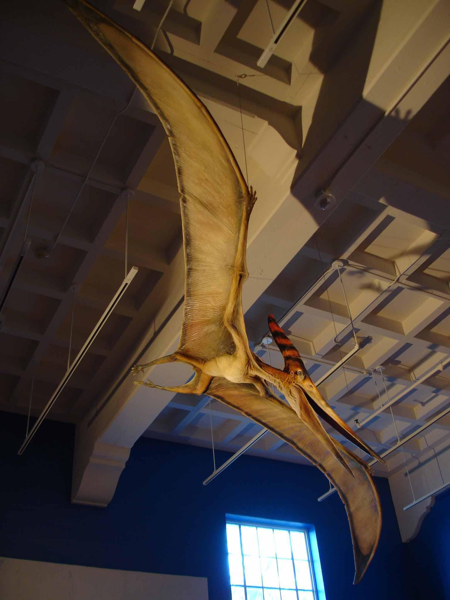 Blue Rhino Studio, 21' Wingspan Pteranodon, San Diego Natural History Museum