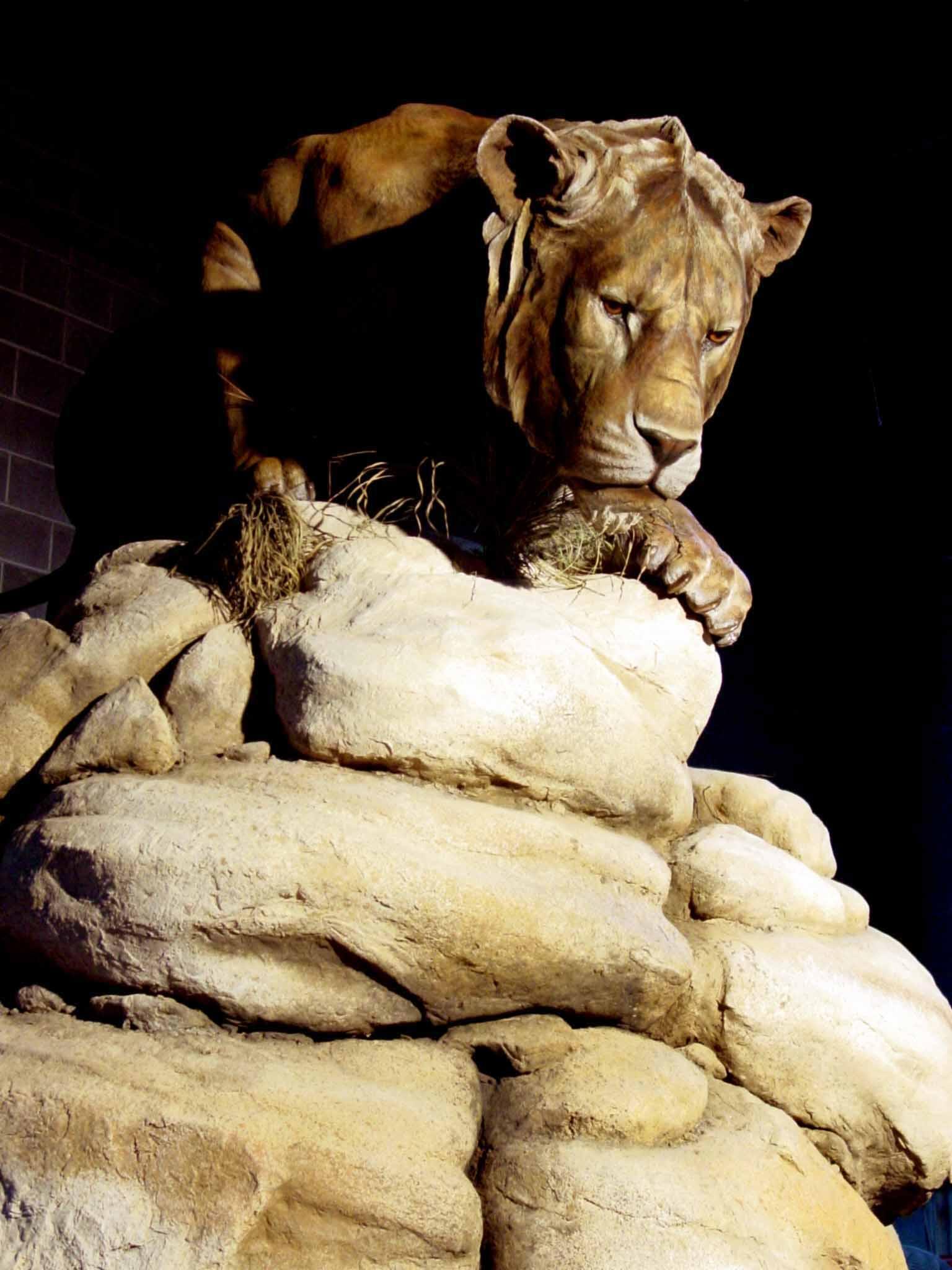 Blue Rhino Studio, Prehistoric American lion, San Diego Natural History Museum