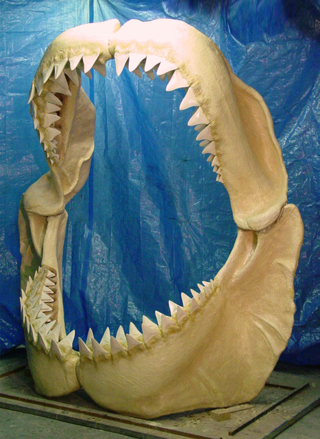 Maxilla and Mandible, Prehistoric Carcharodon megalodon shark jaw