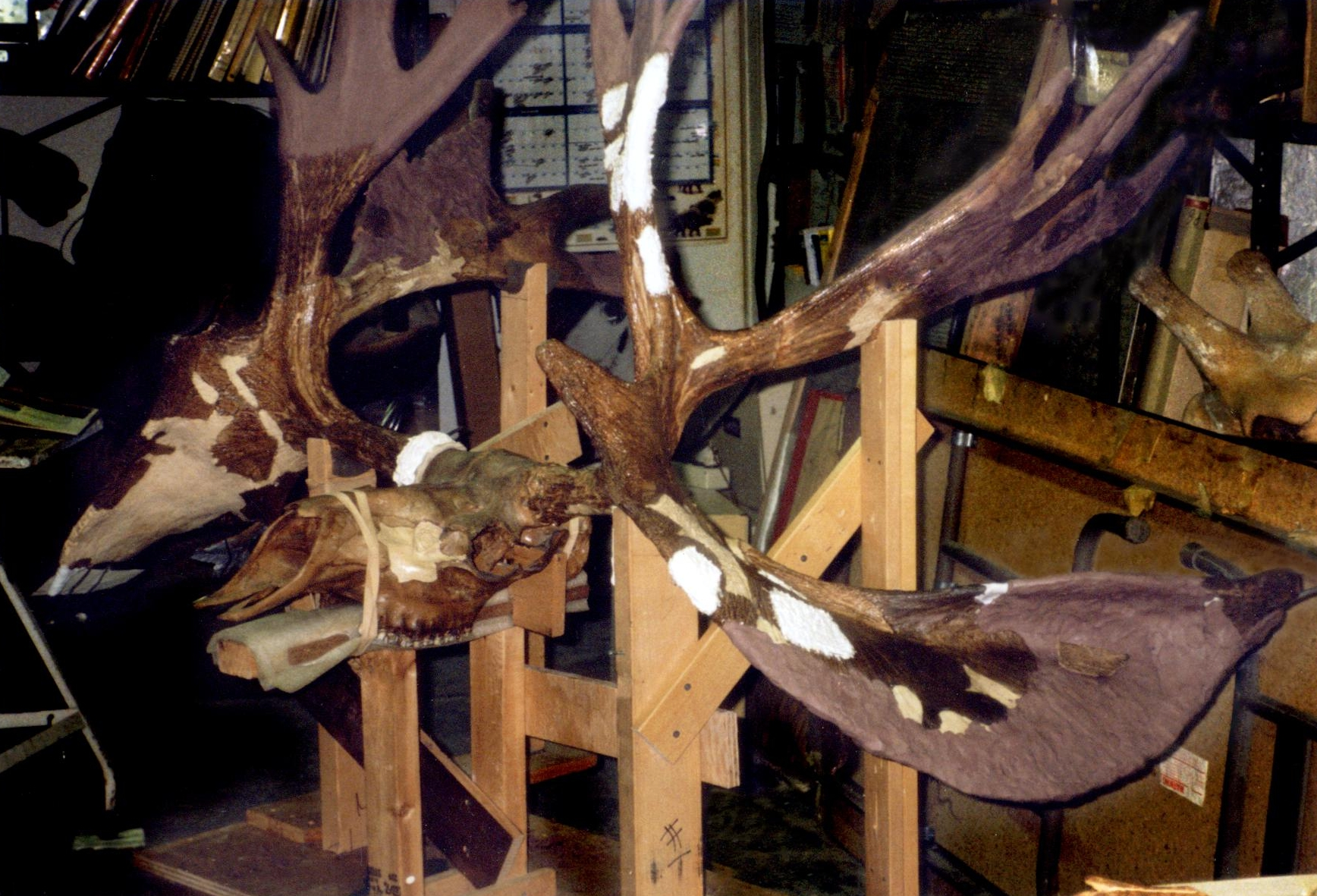 Maxilla and Mandible, Prehistoric antlers