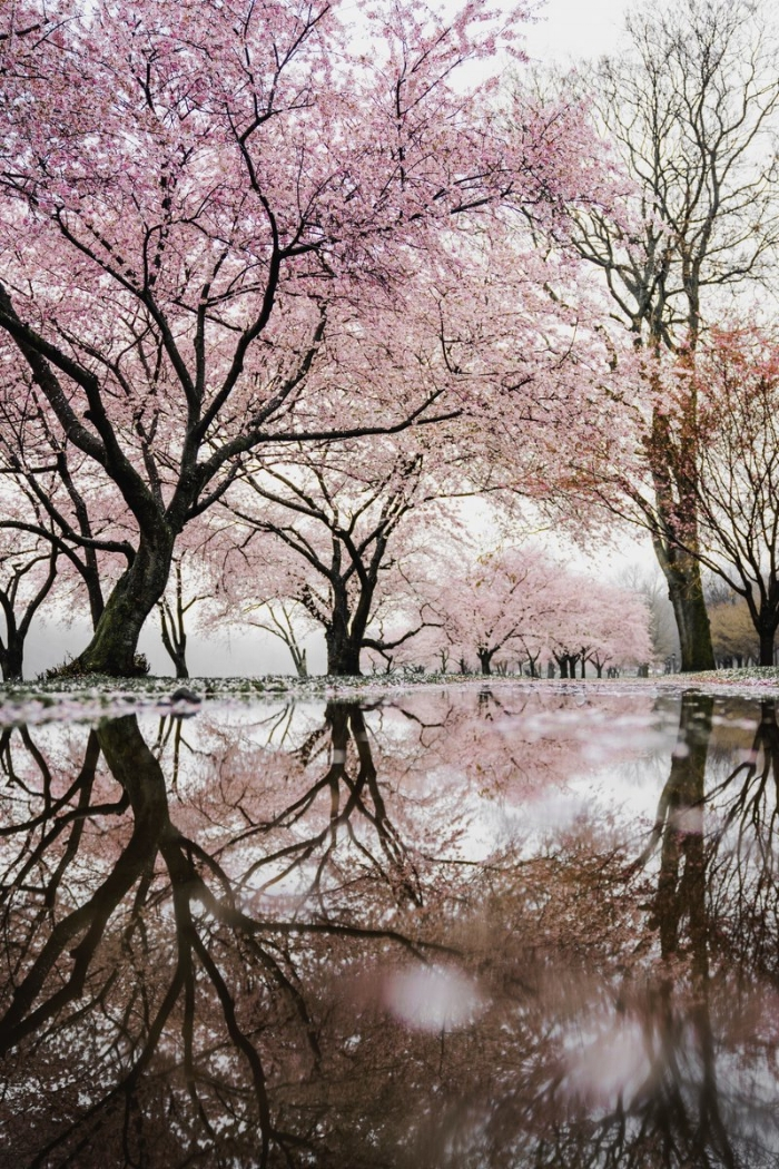 Faerie Glades blossoms falling we walk in flowered rain along the sylvan paths cut deep in imagined nature nymph songs refrain #DimpleVerse
