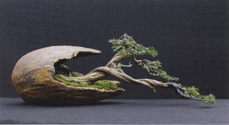 #botaiku 990 tree cut carefully summer meditate yen yearn time again to learn