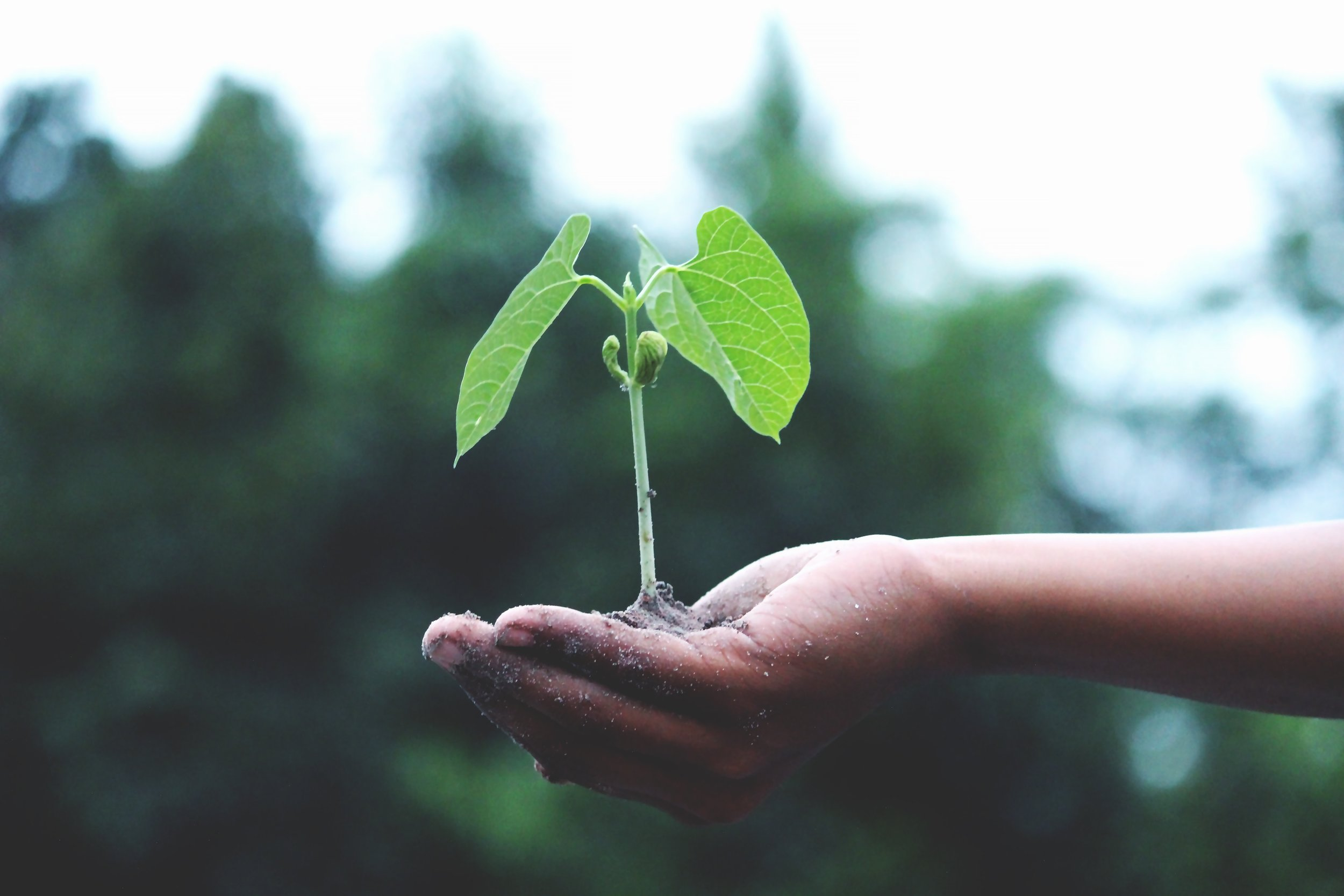 Communicating the importance of sustainability is crucial in adopting sustainable practices. If you communicate why you are adopting these practices, you will be more likely to follow through and observe the change.