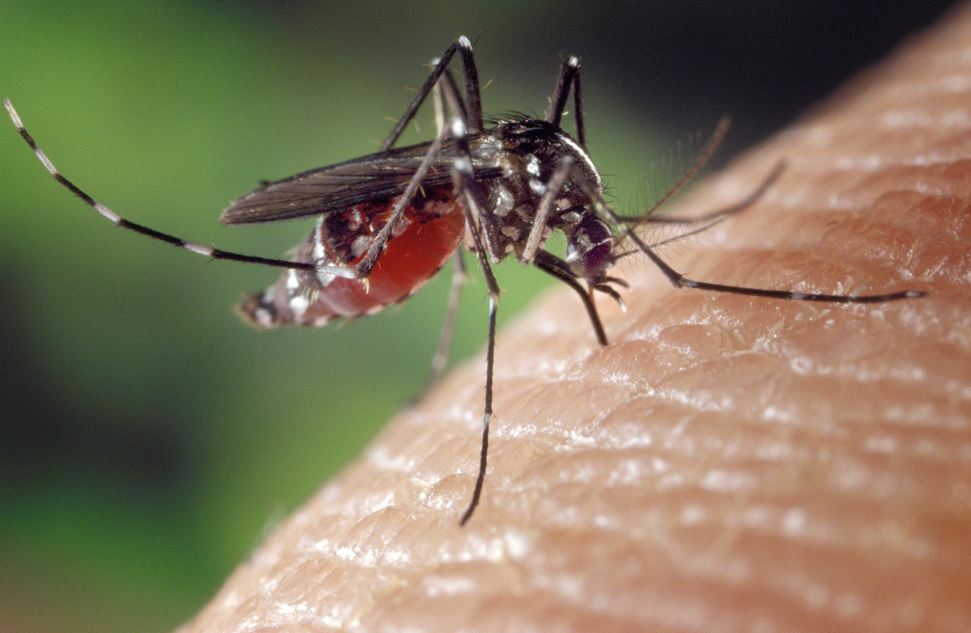 Mosquitos bites are not only annoying, but are proven to spread many diseases.