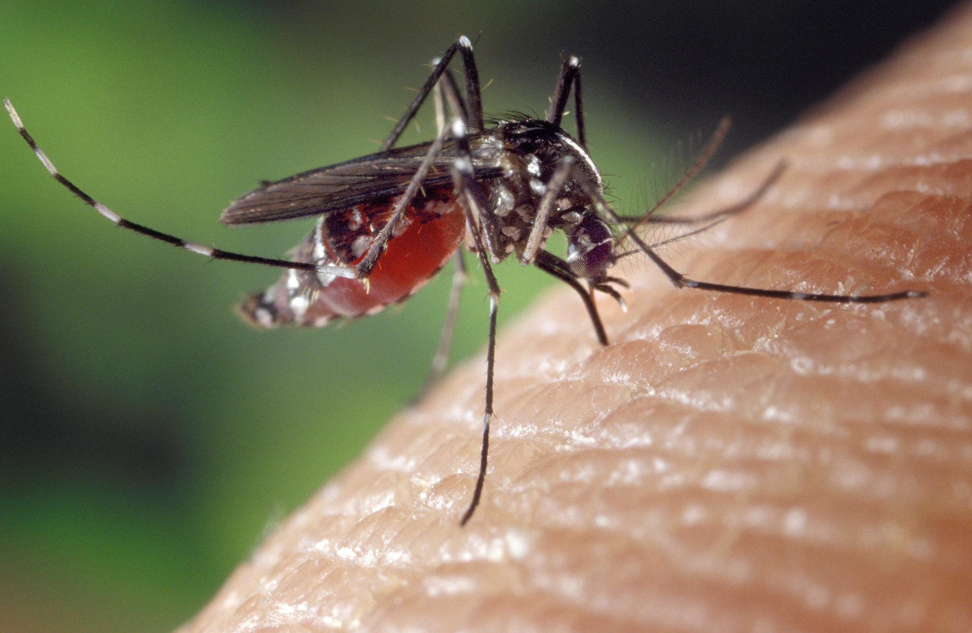 mosquito bite.jpg