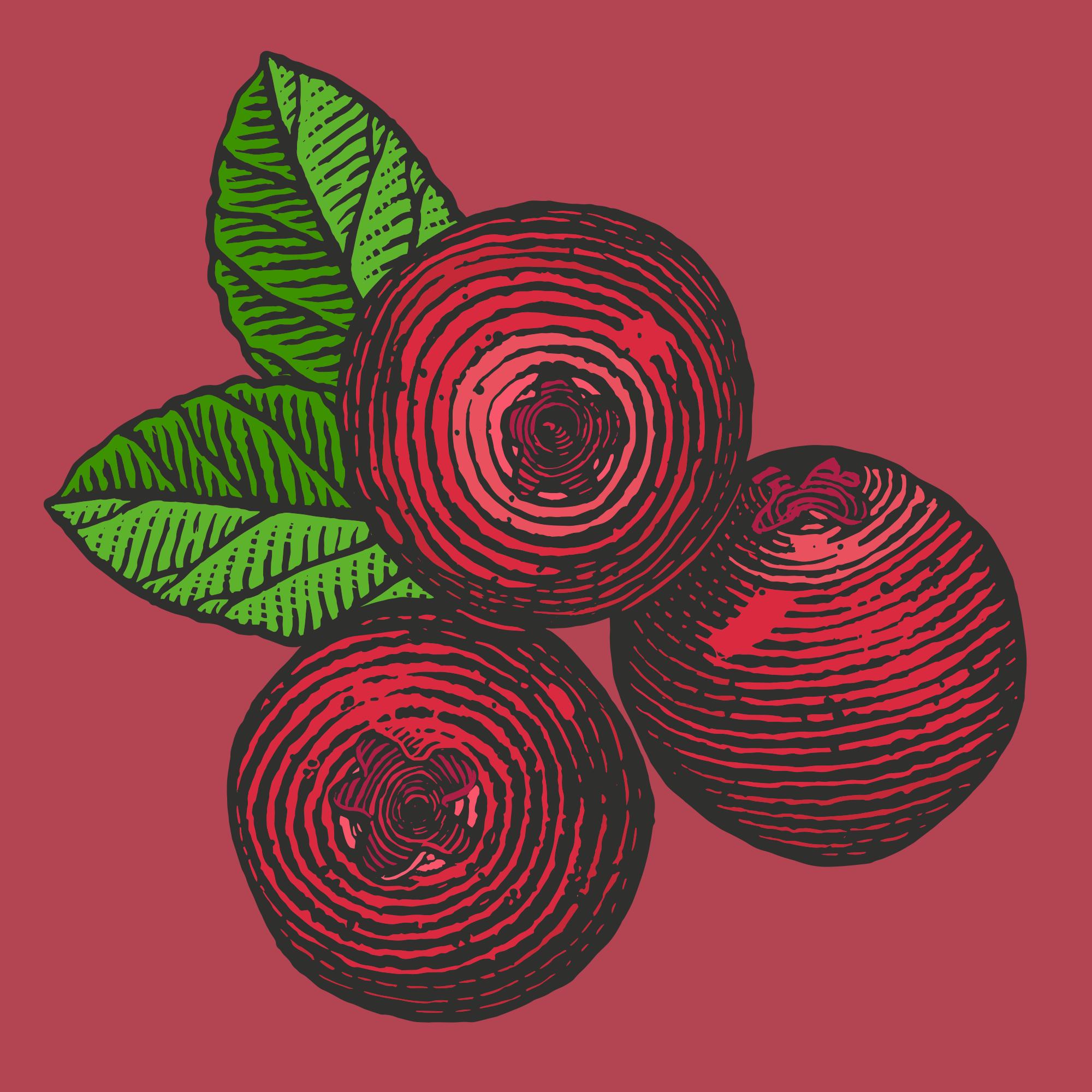 Cranberries 1.png