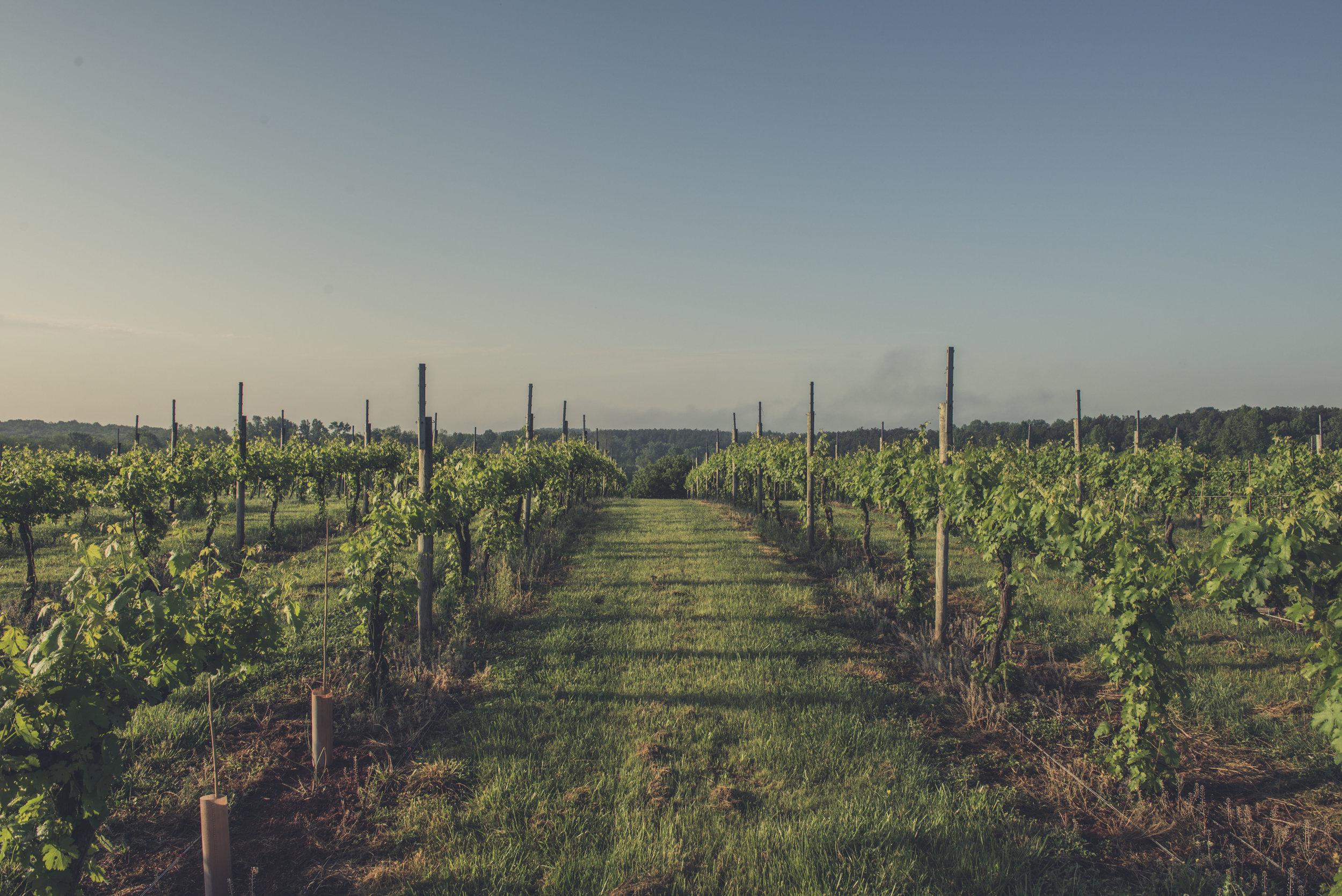Jefferson Vineyards_55.jpg