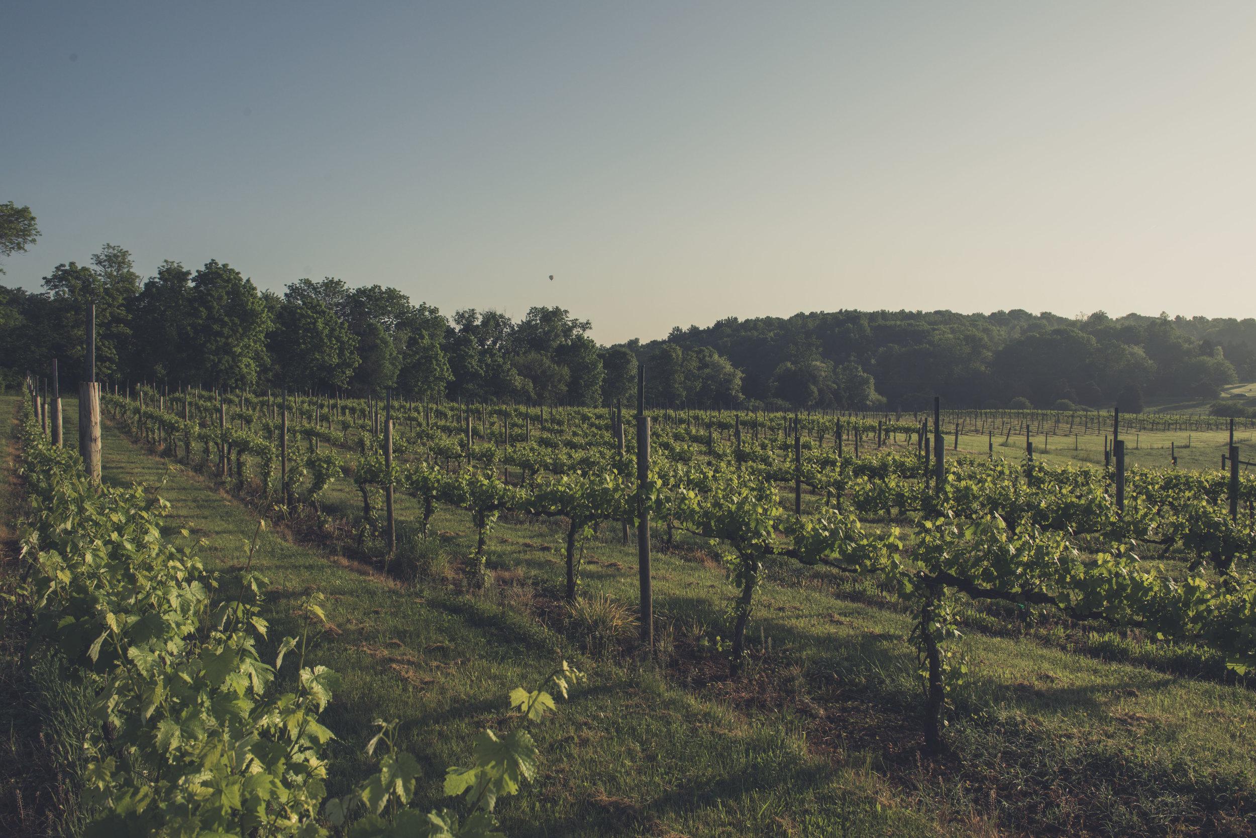 Jefferson Vineyards_70.jpg