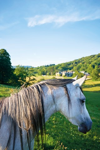 arab-horse-and-view-from-the-hill-at-the-pig-at-combe-hotel-devon-conde-nast-traveller-18oct16-james-merrell_320x480.jpg