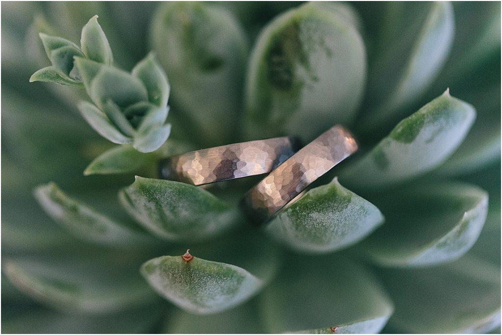 Sukkulente Steinpflanze