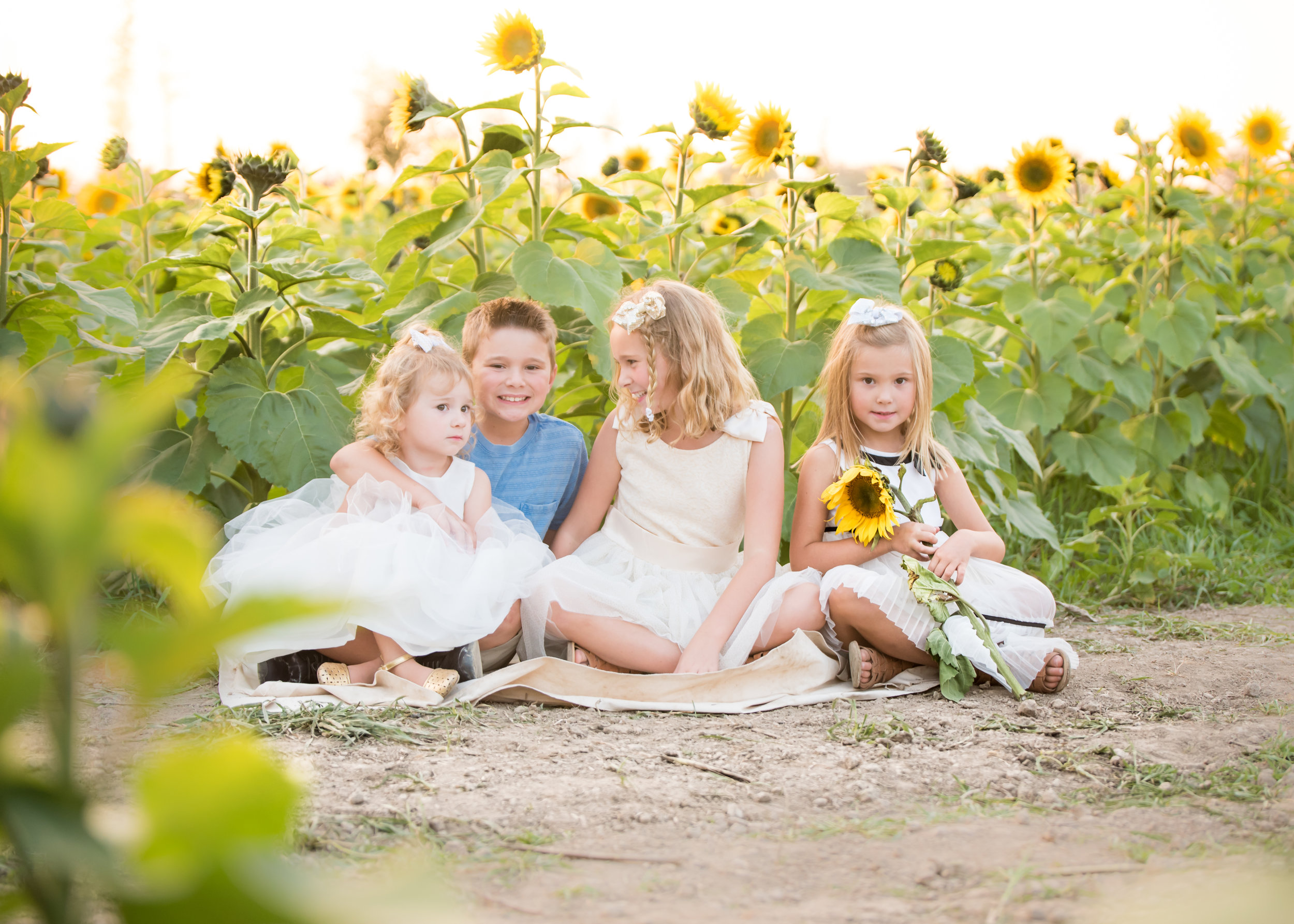 Cleveland Family Photographer, Cleveland Child Photographer, Cleveland Baby Photographer, Sunflower Family Session, Sunflower Mini Session