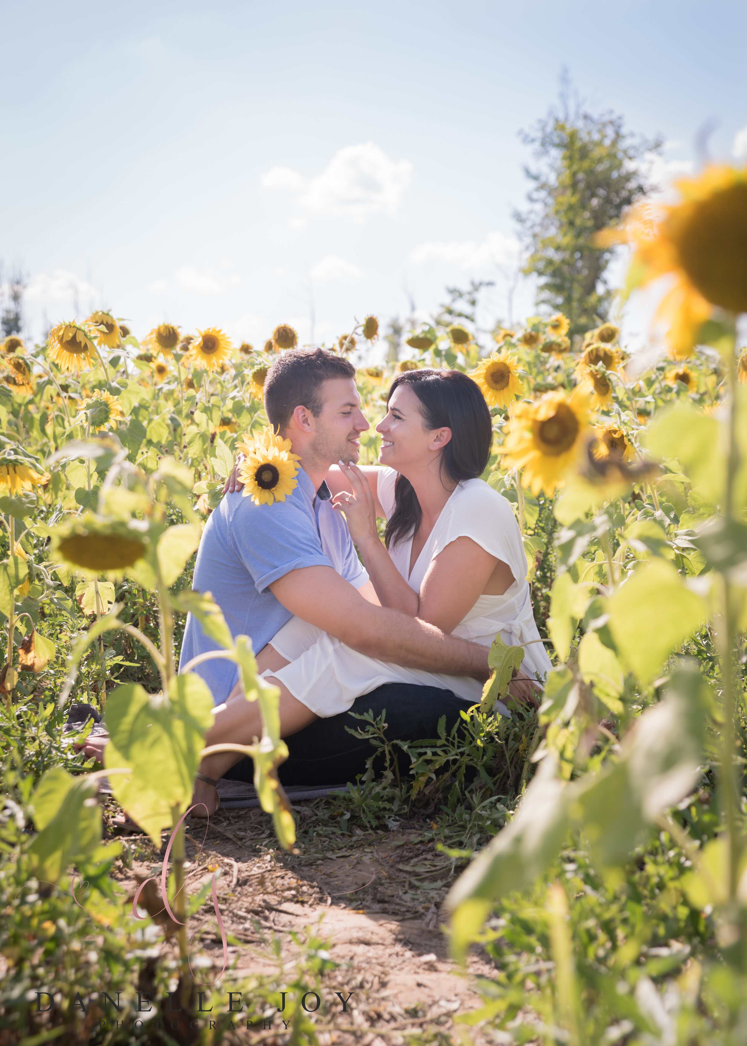 Cleveland Engagement Session | Sunflower Field | Cleveland, Ohio