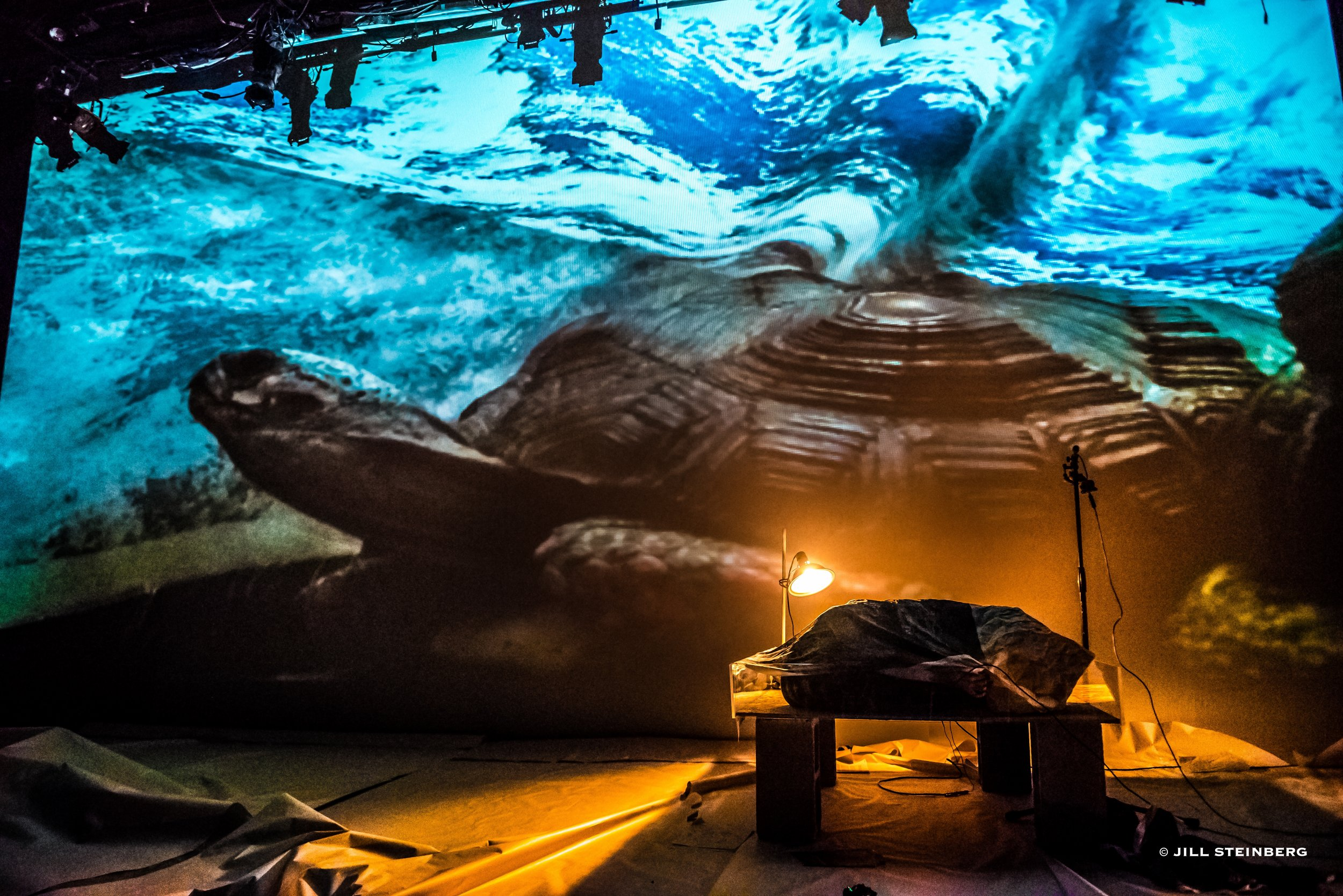 Photographs from June 2017 performance: live-feed video of the tortoise and printed silk maps
