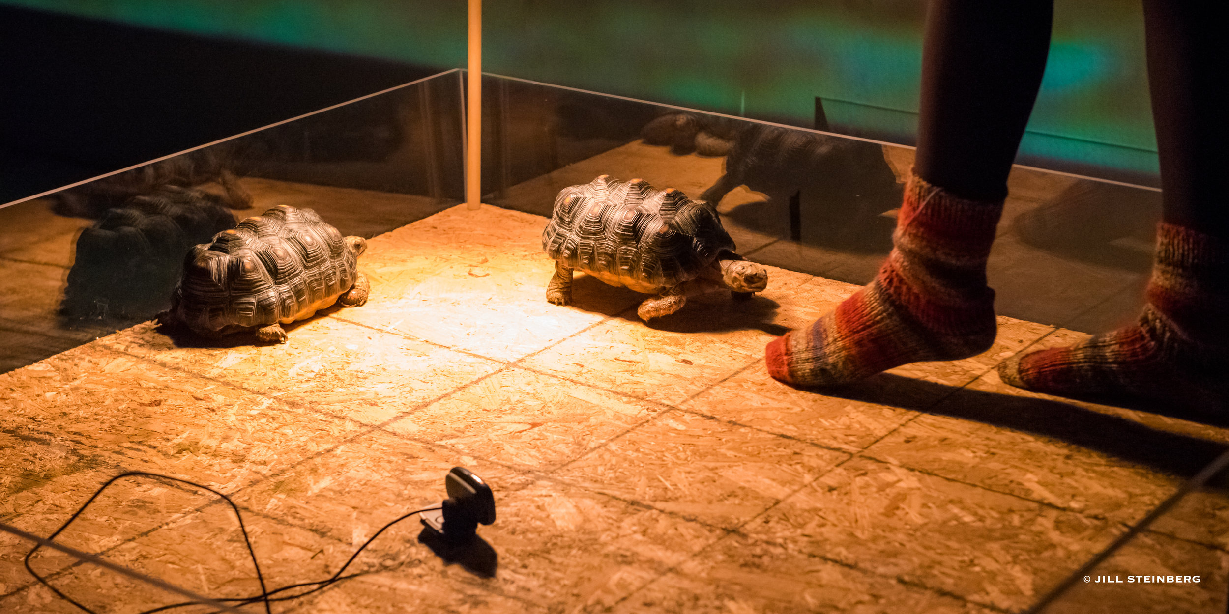 Photographs from June 2017 performance: tortoise stage, socks belonging to Ayse Deniz Karacagil