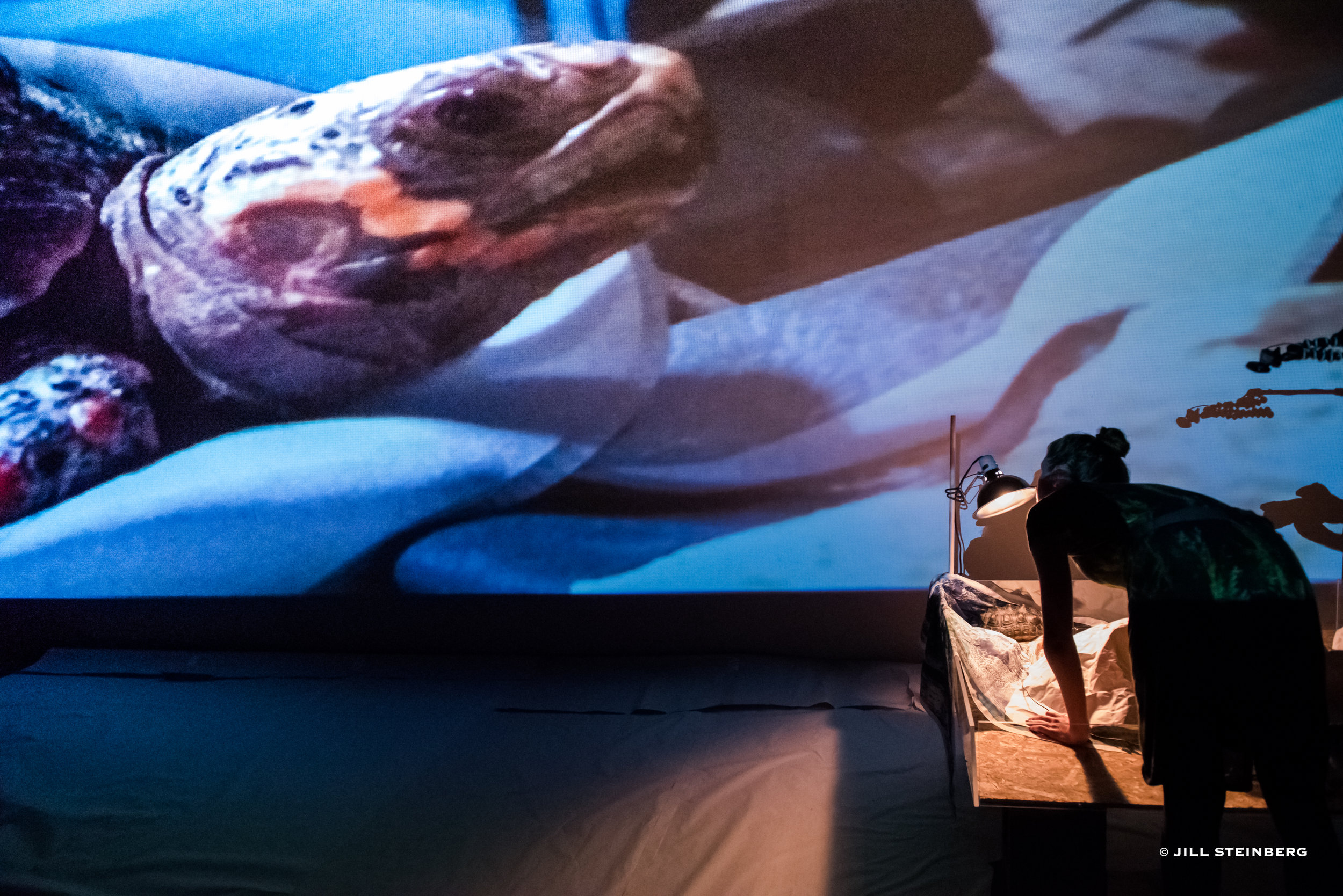 Photographs from June 2017 performance: live-feed of tortoise with printed silk maps