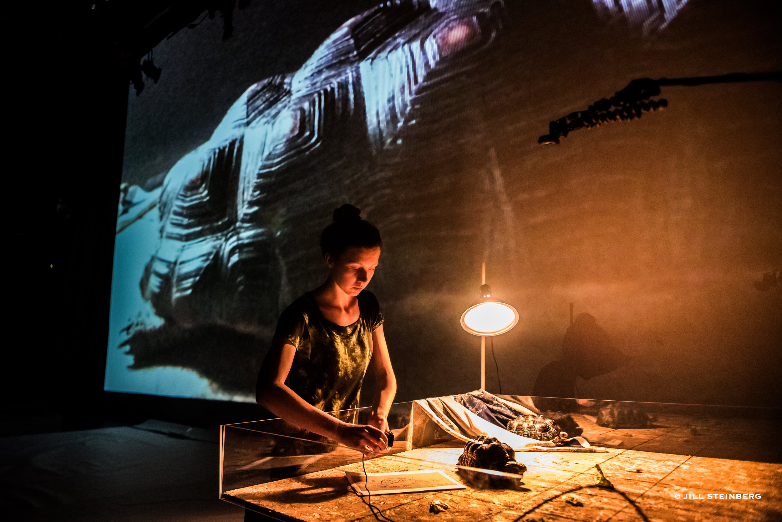 Photographs from June 2017 performance: live-feed of tortoise