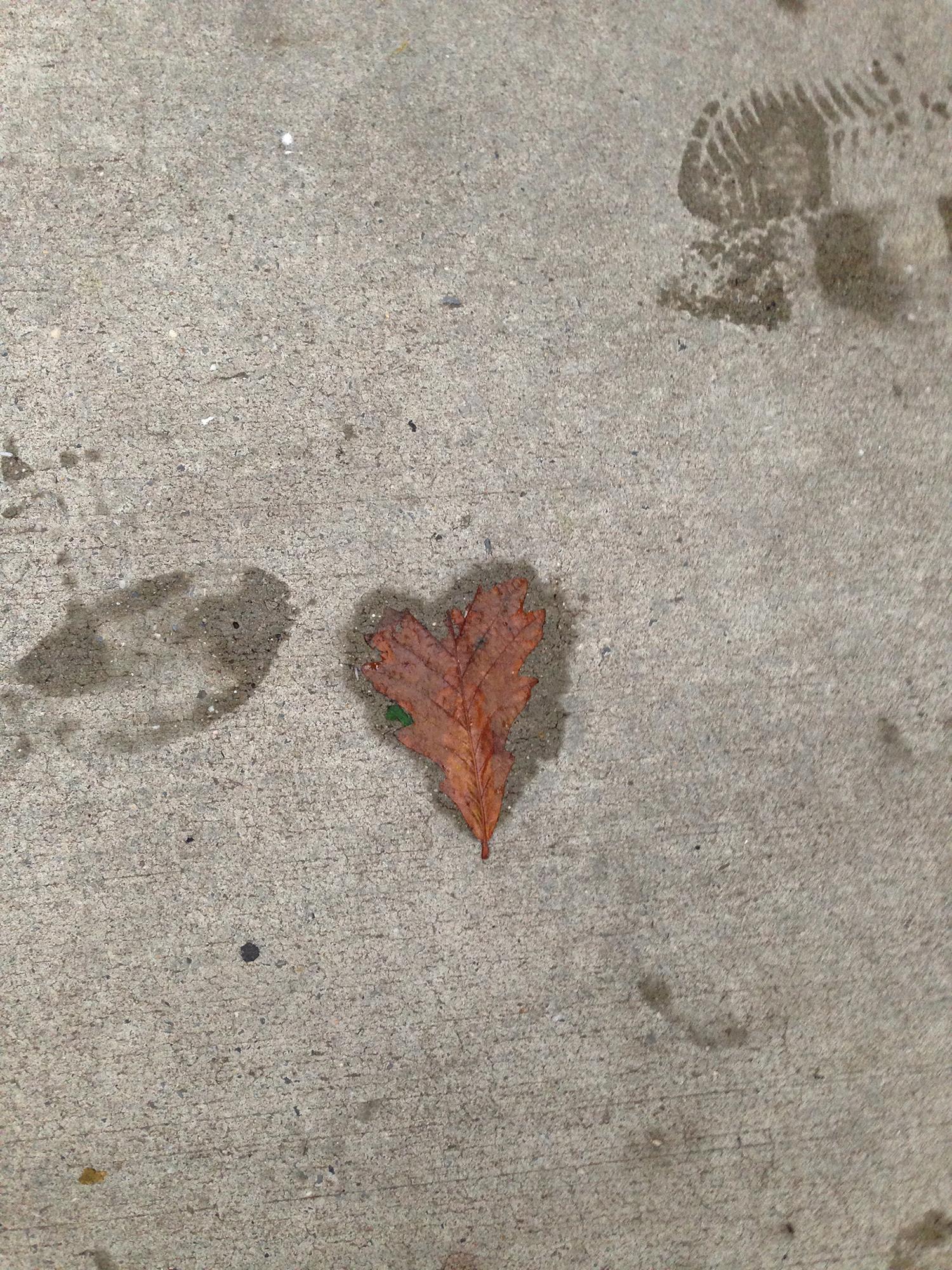 D.2014.10.Heart shaped leaf.2.JPG