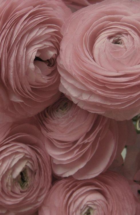 dust pink flowers.jpg