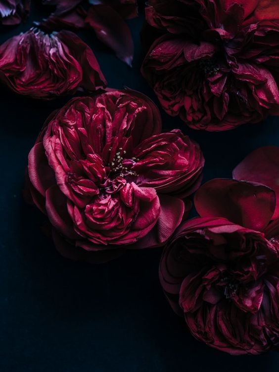 burgundy flowers.jpg