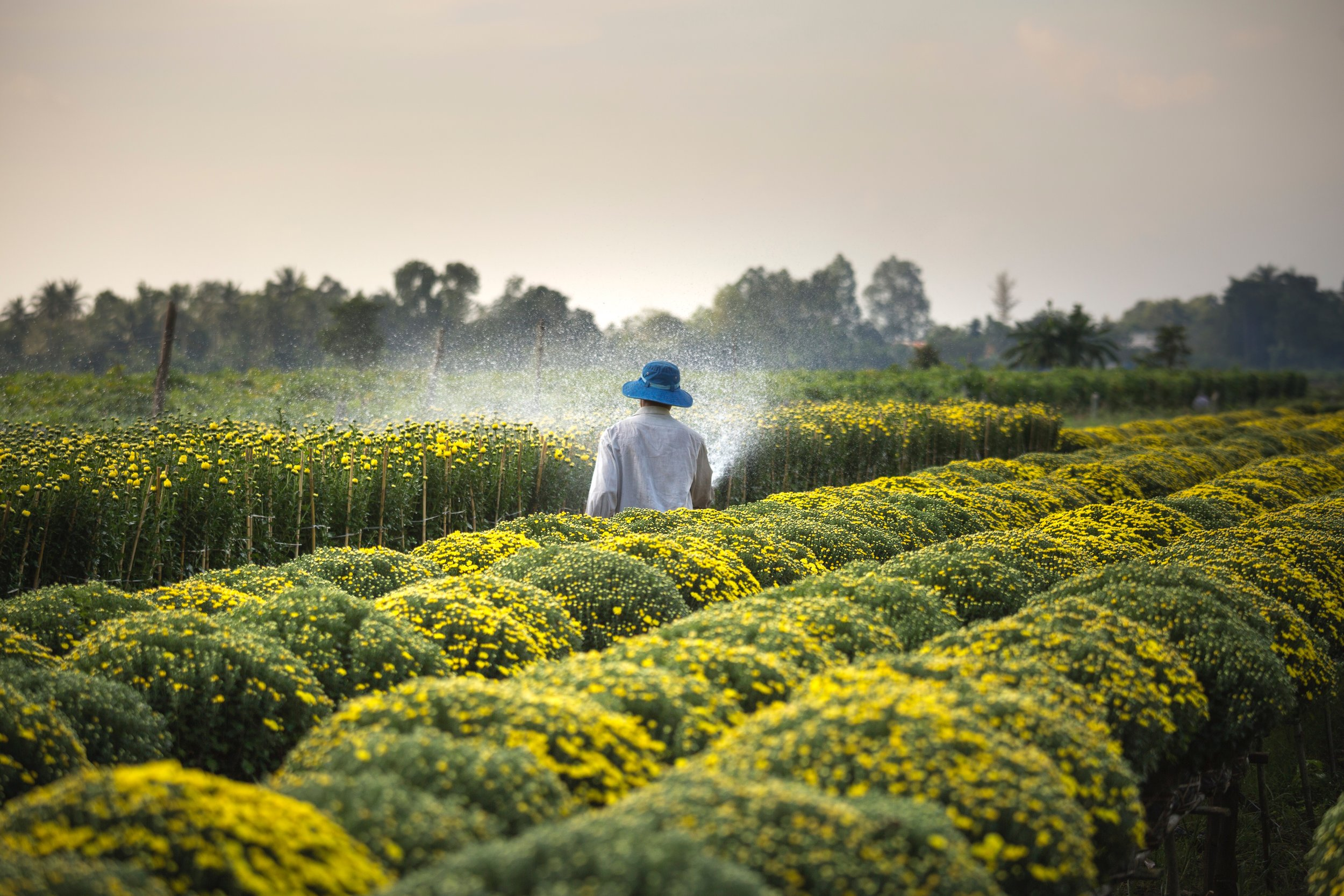 agriculture-close-up-countryside-2132250.jpg