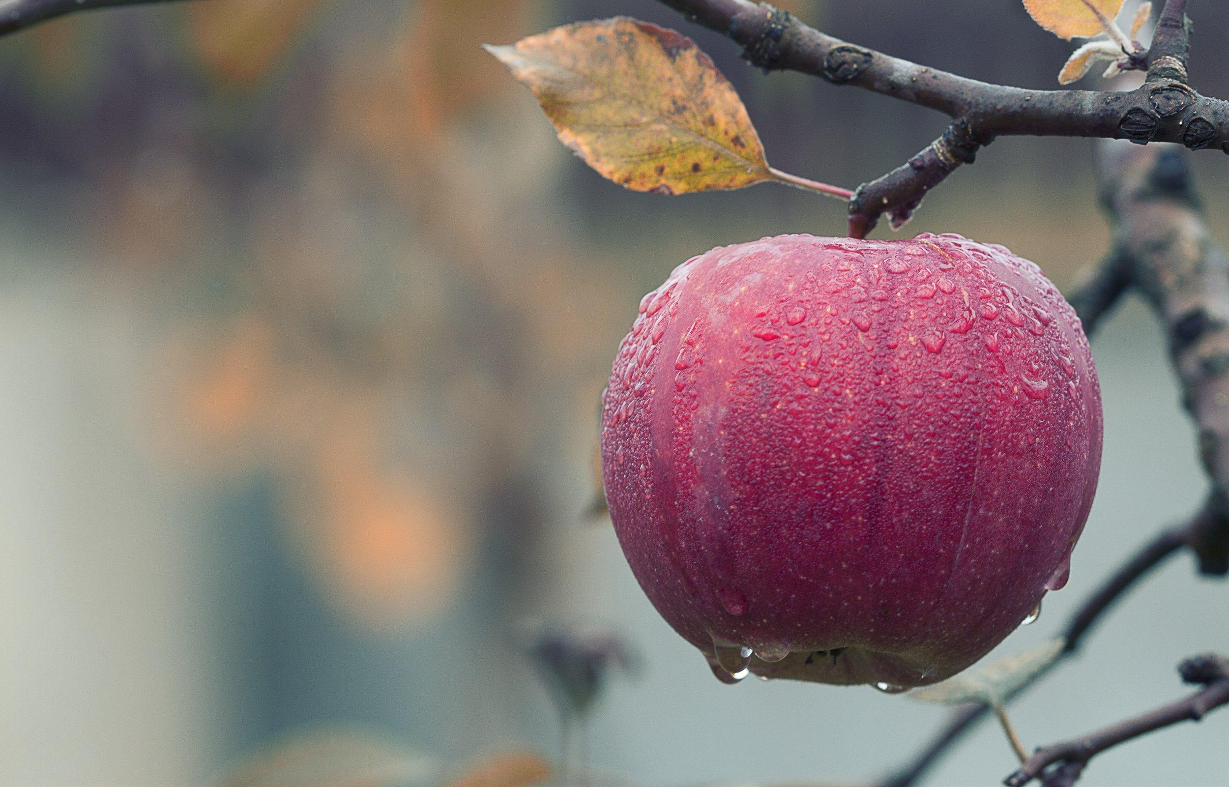 apple-blur-branch-257840.jpg