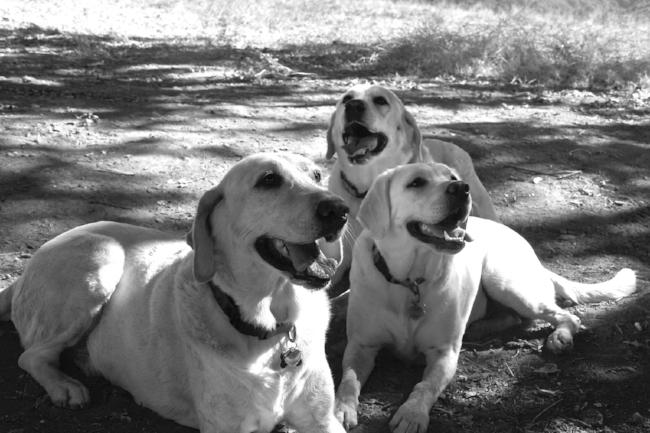 Meet the original Tess, Hallie, & Drake