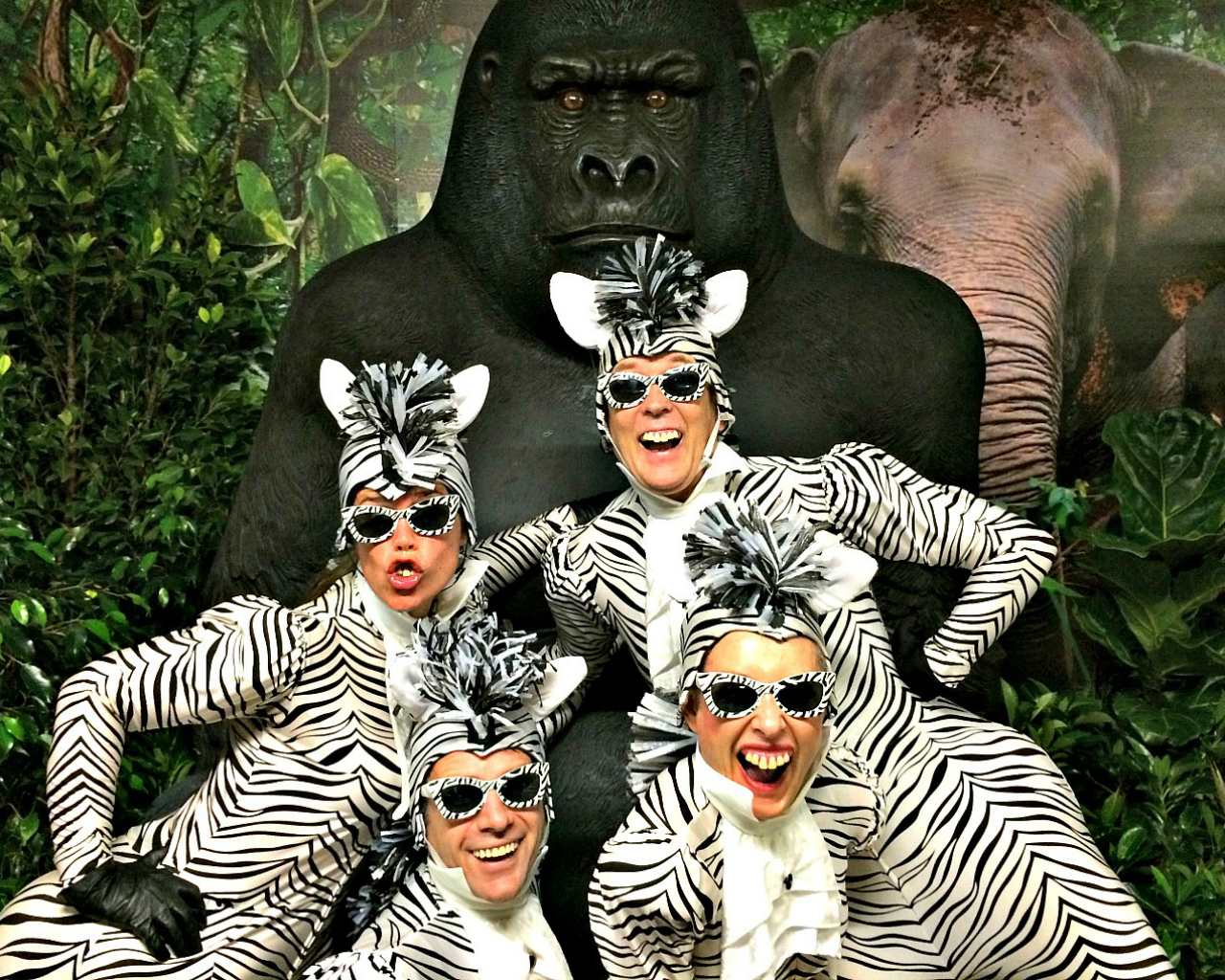 Zebras and Gorilla 1280 x 1024.jpg