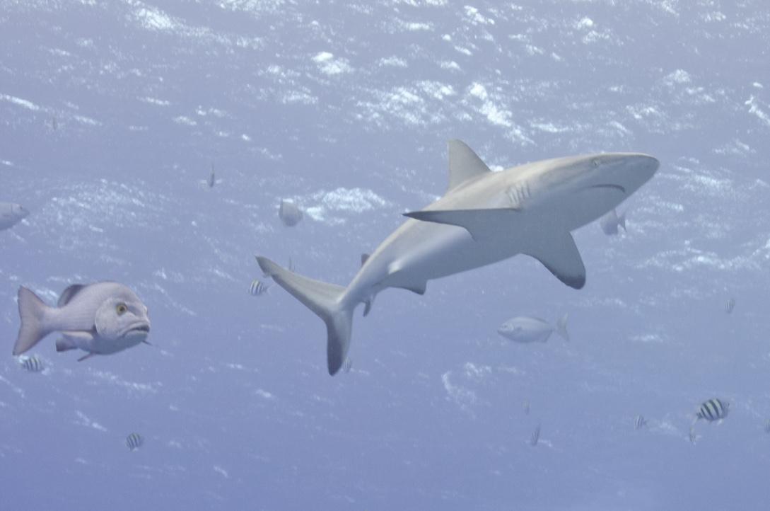 vertigo shark and snapper2-7261ed3_1024.jpg