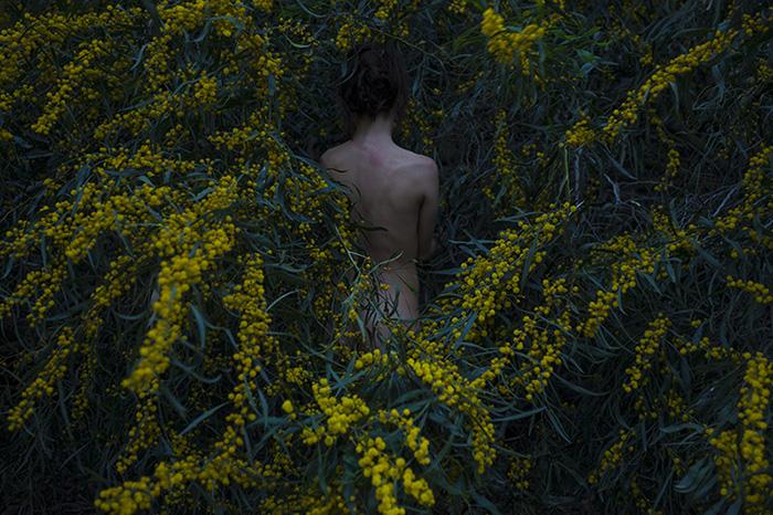 Golden Wreath Wattle, 2015, Inkjet print, 110X165 cm, Edition of 5 + IIAP.jpg