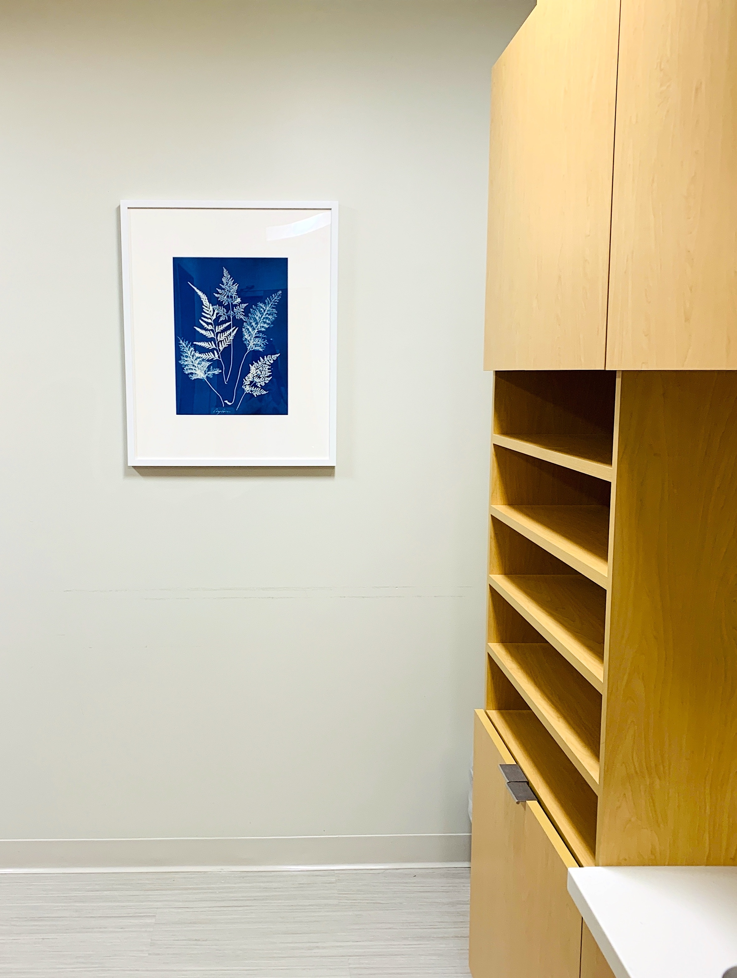 Installation View: Artwork by Anna Atkins