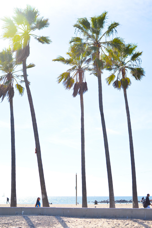 Day Trip Venice Beach-11.jpg