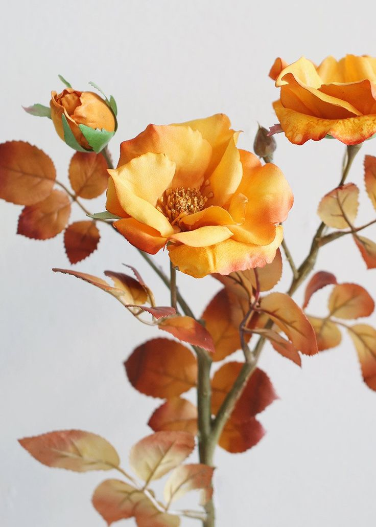 Golden Mustard Rose