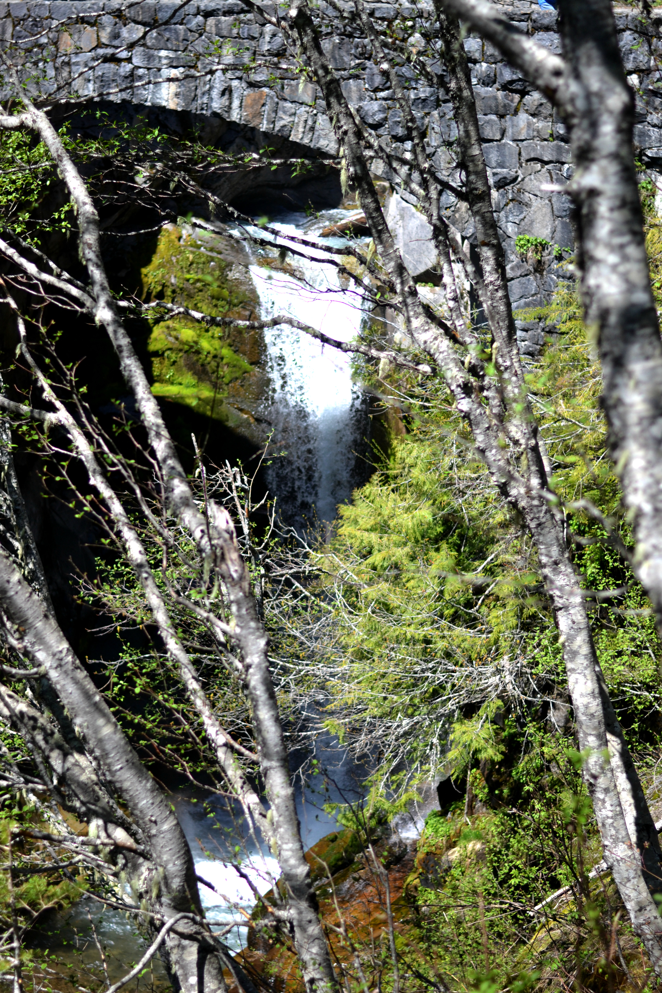 Christine Falls at Mount Rainier!