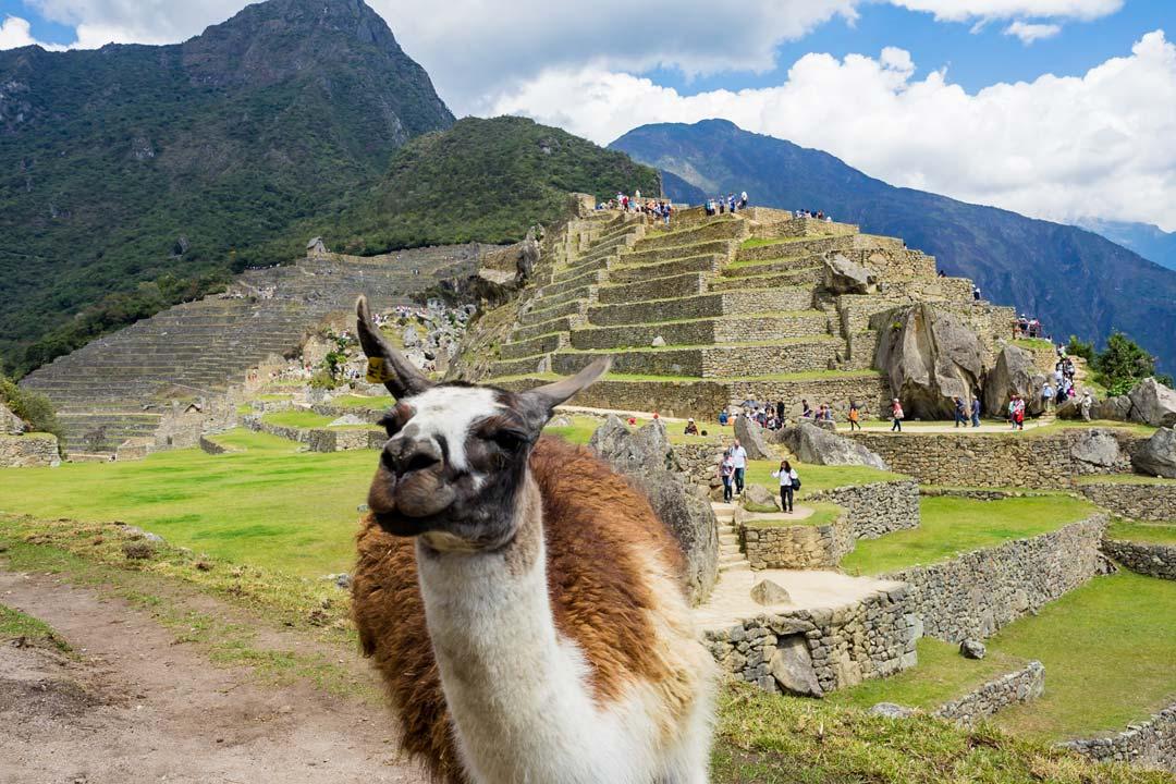 Llama-Machu-Picchu-Low-1.jpg
