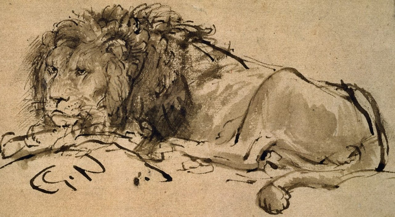 A Lion Lying Down , by Rembrandt.